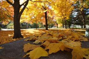 autumn-2898551_640